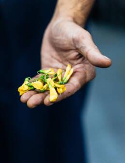 Edible flowers — Restaurant Bolan