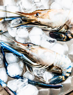 Giant river prawn Still Life